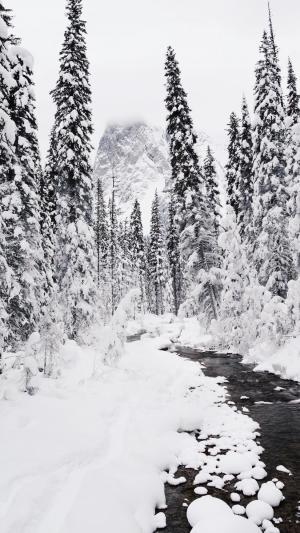 优美迷人的冬天雪景