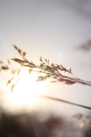 唯美阳光的清新风景图