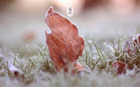 二十四节气霜降