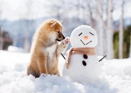 雪地里的萌宠