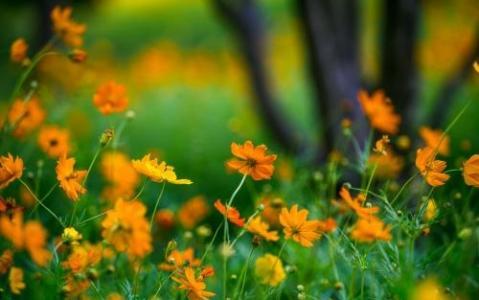 小清新唯美花朵