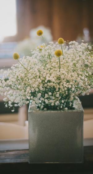 小清新花草绿植