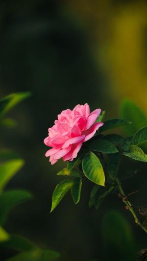 春天里的花海