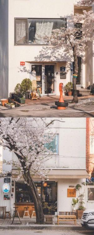 樱花时节日本小镇文艺小清新风景写真