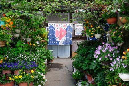 文艺充满诗情画意的盆栽花卉图片