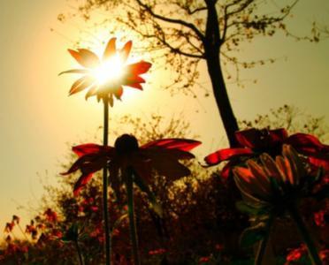 如梦如幻唯美夕阳风景图