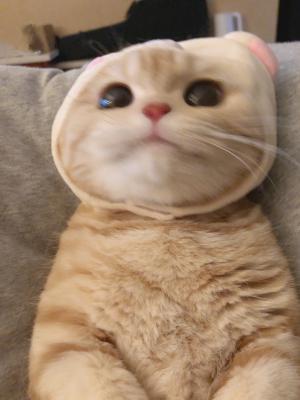 很萌的可爱橘猫图片大全