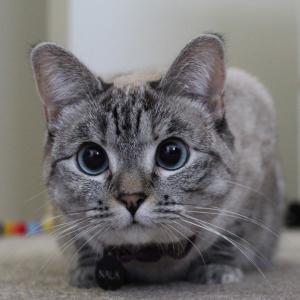 可爱宠物猫咪呆萌微信头像