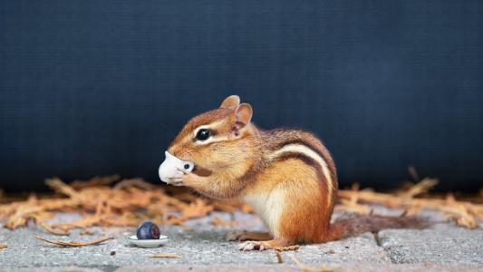 软萌可爱的小松鼠