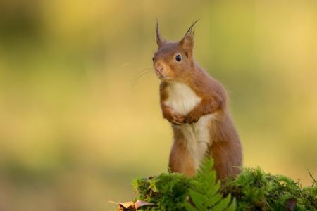 动作灵活的可爱小松鼠