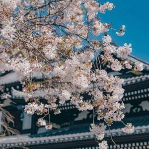 2020日本镰仓旅游唯美风景照