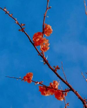 花与月唯美清新意境风景图