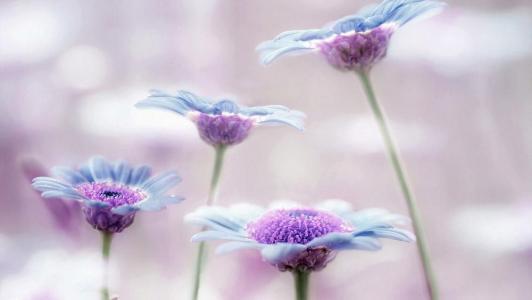 小清新花朵唯美意境风光