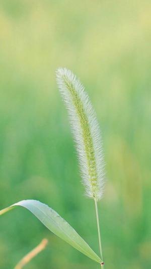 夏日小清新护眼绿植写真