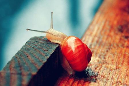 可爱而缓慢的蜗牛