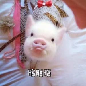 可爱小猪表情包