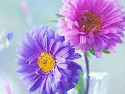 小清新唯美的各式鲜花图片