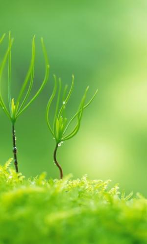 充满生机小萌芽的美图
