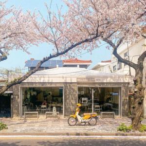 樱花树下的浪漫小屋