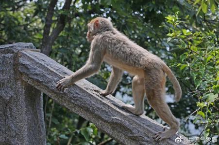 连云港花果山猴子活泼可爱图片大全