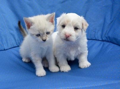可爱萌系的猫和狗