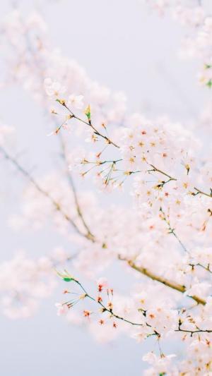 花开枝头的美