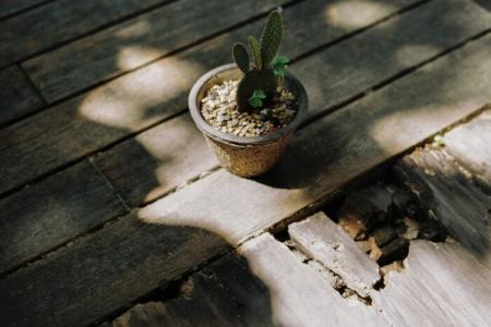 小清新唯美植物摆拍