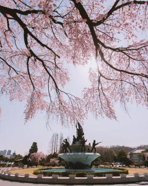 烂漫樱花时节的日本唯美清新风景