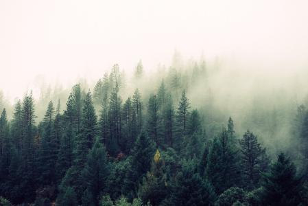 唯美清新森林风景图片