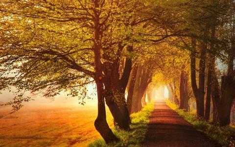 深秋的森林美景