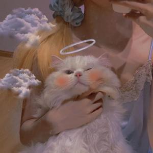 可爱萌猫头像 可可爱爱没有脑袋