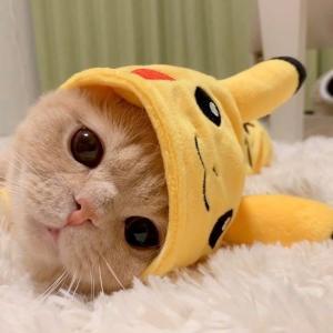 史上最可爱的猫咪图片大全