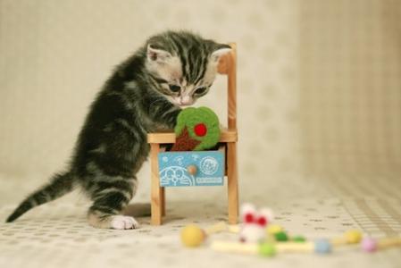 茶杯可爱小猫咪