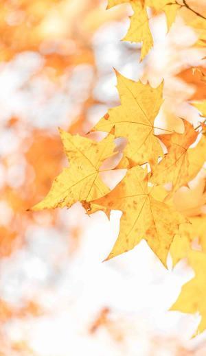 迷人的秋天景色