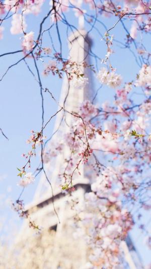 唯美迷人的樱花树下