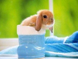 超级可爱的小兔子