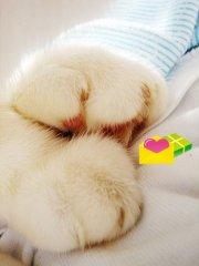 可爱非常的猫咪爪爪