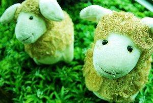草地里两只可爱的喜羊羊