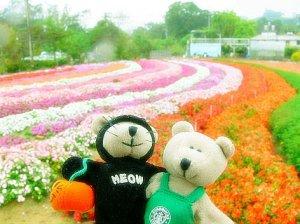 浪漫小熊的花园之途
