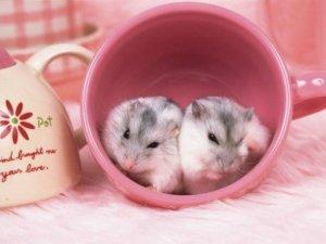 可爱的情侣小老鼠