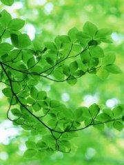 清新的绿色树林手机图片