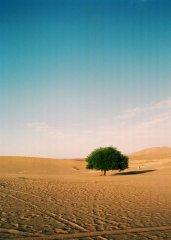 宁静而美丽的沙漠
