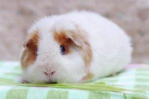 超级可爱的小动物