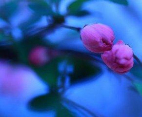 夜幕下的花朵图片