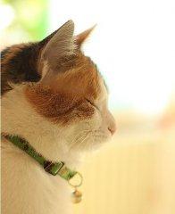 超级可爱的充满幻想的猫咪