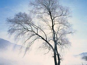 冬天美丽的雪景图片之二