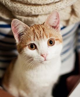 萌表情的可爱猫咪图片