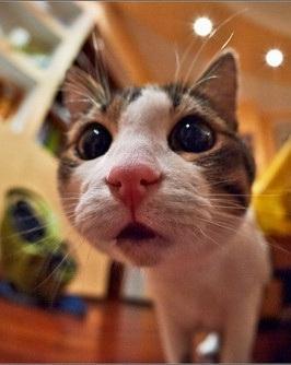 可爱搞笑萌表情的猫咪