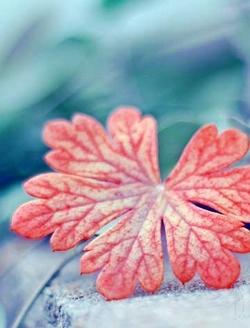 暖暖的美丽秋景图片