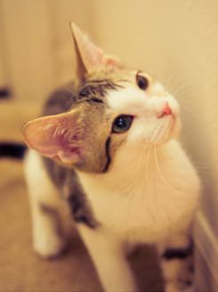 超可爱萌物猫咪图片